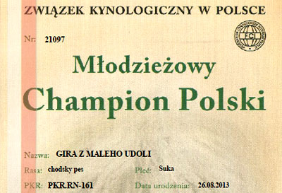 Gabi - Best of Breed, Chodsky Pes - Owczarek Czeski